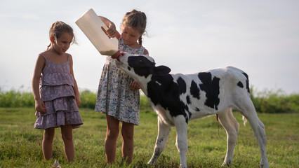Authentic shot of two little girls are feeding from the bottle with dummy an ecologically grown newborn calf used for biological milk products industry on a green lawn of a countryside farm with a sun Wall mural