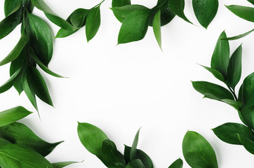 Green twigs top view frame with text space. Decorative plant branches, greenery border. Fresh leaves with dew drops on white background. Exotic foliage, tropical, rainforest plant backdrop Fototapete