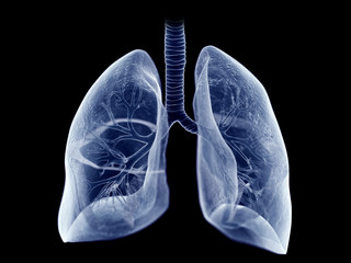 3d rendered medically accurate illustration of the lung