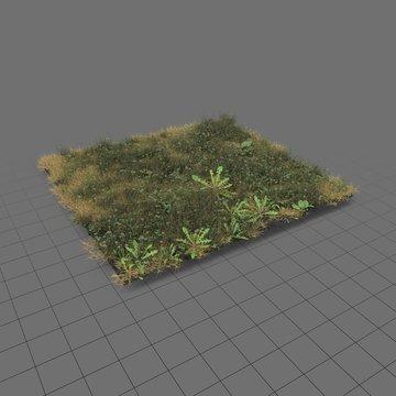 Ryegrass meadow patch