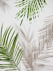 Tropical palm green leaves on light pastel background. Unobtrusive botanical background with shadow on the wall - trend frame, cover, card, postcard, graphic design - 3D, render, illustration.