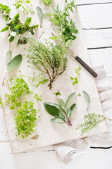Fresh mixed herbs like sage (Salvia),oregano (Origanum vulgare),thyme (Thymus),chickweed (Stellaria media) and peppermint (Mentha piperita) on white chopping board with knife and napkin