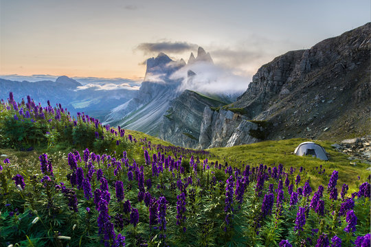 Tent in flower bed in front of beautiful rugged Seceda mountain range at sunrise in South Tyrol, Italy