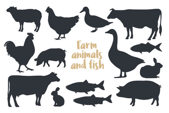 Set of silhouettes farm animals Isolated on light background. Image for meat stores , market, packaging and advertising. Vector illustration.