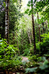 A Beautiful Forest Trail