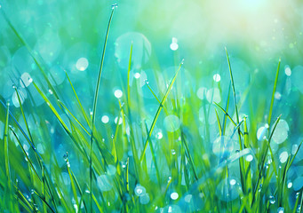 Abstract green grass nature blurred background on meadow. Juicy lush grass on meadow with drops dew in morning light, outdoors. artistic image of purity freshness nature. close up. shallow depth Fotoväggar