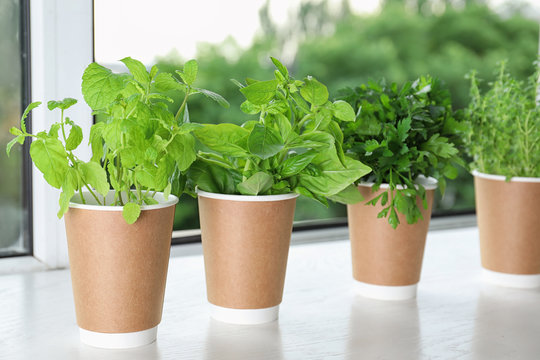 Seedlings of different aromatic herbs in paper cups on white wooden window sill