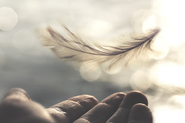 meeting between a delicate feather of a woman's hand Fotomurales