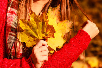 Woman in autumn park picking gold leaves