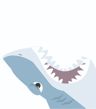 Shark open mouth on a white background