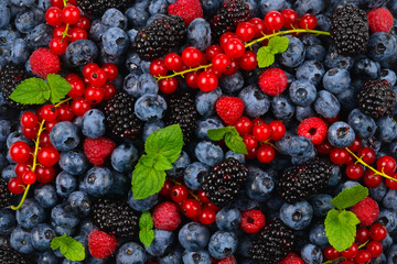 Blackberry, raspberry, blueberry,  red currant and mint background. Fototapete