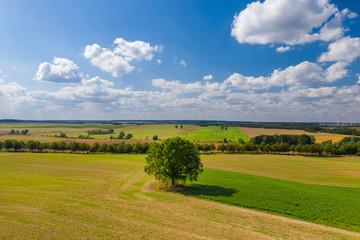 Baum auf einem Feld in der Uckermark im Land Brandenburg