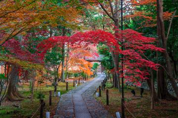 京都 鹿王院の紅葉