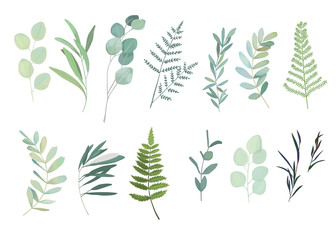 Floral greenery set with eucalyptus, fern and olive branch. Vector illustration Fototapete