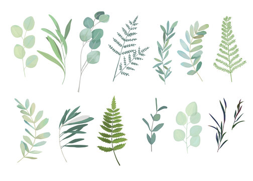 Floral greenery set with eucalyptus, fern and olive branch. Vector illustration