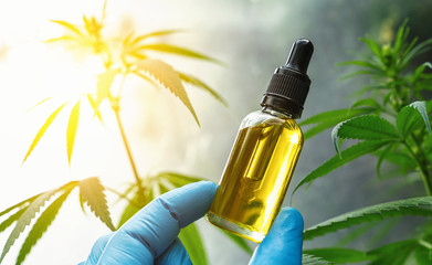 Hand holding bootle of biological and ecological herbal pharmaceutical cbd oil in a dropper at a Hemp farm. Concept of herbal alternative medicine, cbd oil, pharmaceutical industry