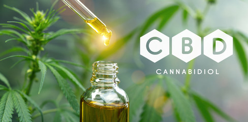 droplet dosing a biological and ecological hemp plant herbal pharmaceutical cbd oil from a jar. Concept of herbal alternative medicine, cbd oil, pharmaceutical industry
