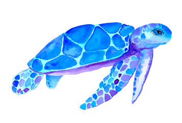 Watercolor blue turtle isolated on white background. Hand painted nautical illustration.