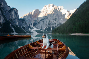 dog on lake braies in italy. Australian Shepherd in a boat. pet travel to Lago di Braies