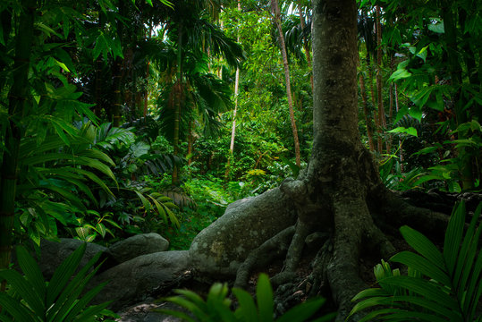 Southeast Asian tropical rainforest with big tree