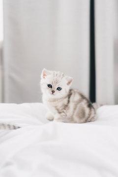 Little kittens on the pillow