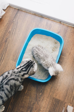 Kitten with cat learning litter can usage