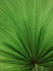 Lush green huge tropical plant background