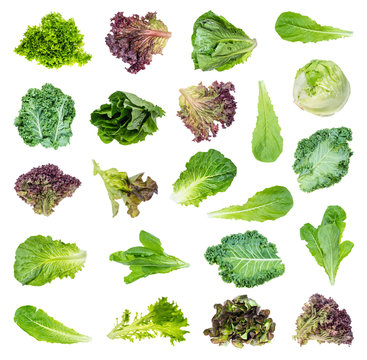 set of various fresh lettuces and kale cutout