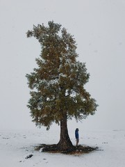 Direct view of man standing under conifer tree as it snows