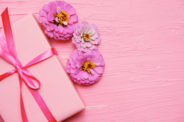 Pink Zinnia flowers with gift box and ribbon for present, mothers day or birthday holiday concept. ...