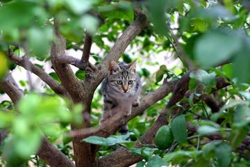 Brown tabby kitten sitting on a lemon tree. Selective focus.