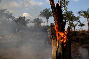A tract of Amazon jungle is seen burning as it is being cleared by loggers and farmers in Iranduba