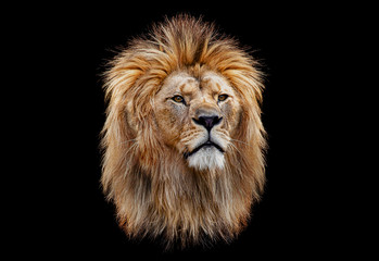Spoed Foto op Canvas Leeuw Coloured lion head on a black background