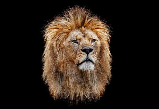 Coloured lion head on a black background