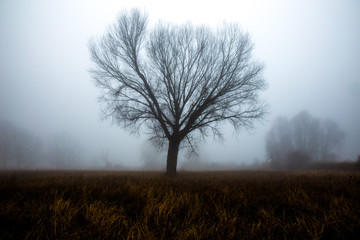 A tree silhouette in the fog, with some more distant trees