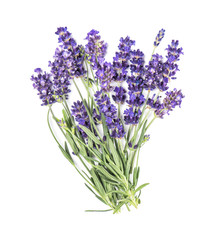 Lavender flower bunch isolated white background Fresh herbs
