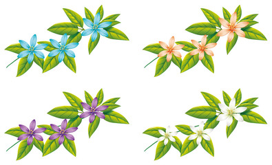 Four different color of flowers on green leaves