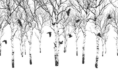 Wall Mural - Birch Grove