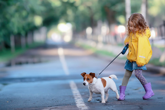 little girl with a dog jack russell terrier / child childhood friendship, pet, small dog in the autumn park walk