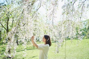 スマートフォンで桜の花を撮影する女性