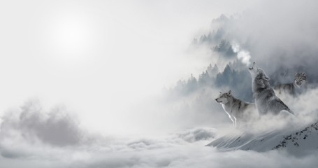 Canvas Prints Wolf Wolfsrudel