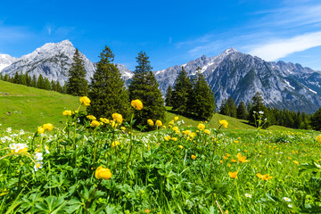Alpine meadows Karwendel Nature Park, Austria, Tyrol.