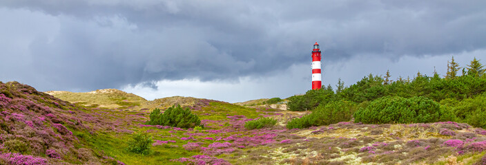 Leuchtturm von Amrum mit blühender Heide