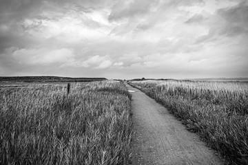 Foto auf Acrylglas Grau Weg an der Nordseeküste bei Nebel, Insel Amrum