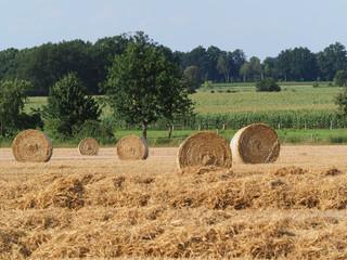 Weizen, Strohernte, grosse Rundballen auf dem Feld