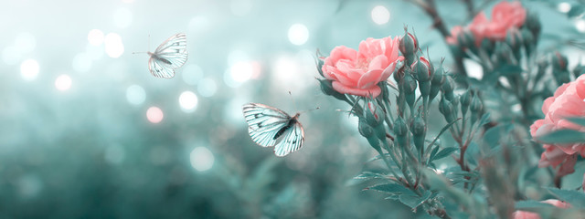 Mysterious spring floral banner with blooming rose flowers and flying butterflies on blurred background and shiny glowing bokeh