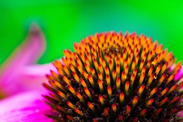 closeup of a flower