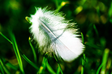 feather gras