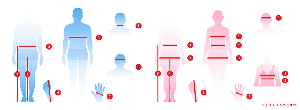 Body parameters man and women in full length