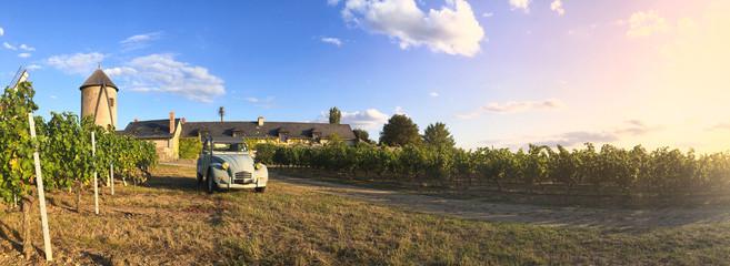 Vin > Vignoble > Paysage > Anjou > France